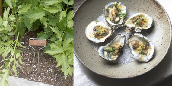 Lovage Herb and Oysters