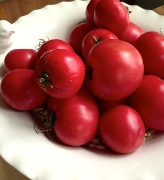 Garden Tomatoes for Grilled Corn and Tomato Salad from Angela Roberts