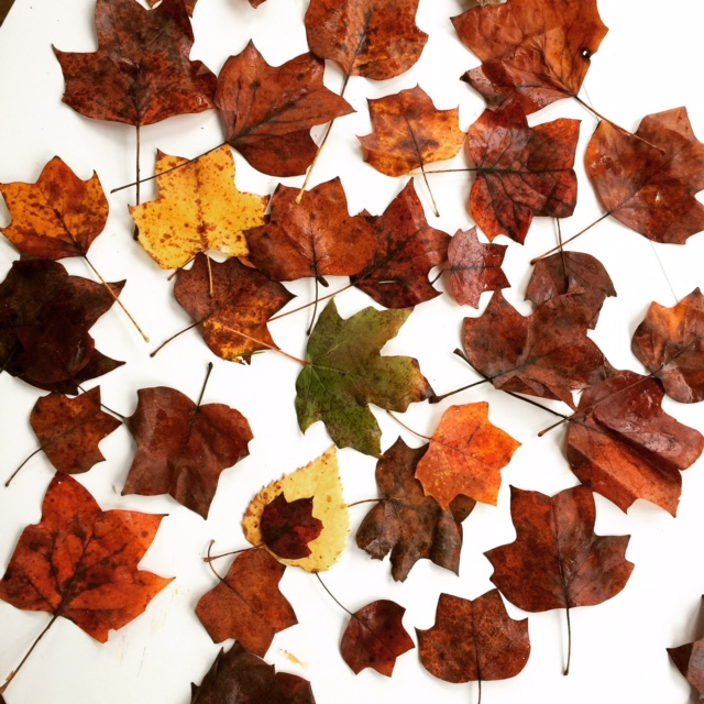 Fall Pumpkin Recipe