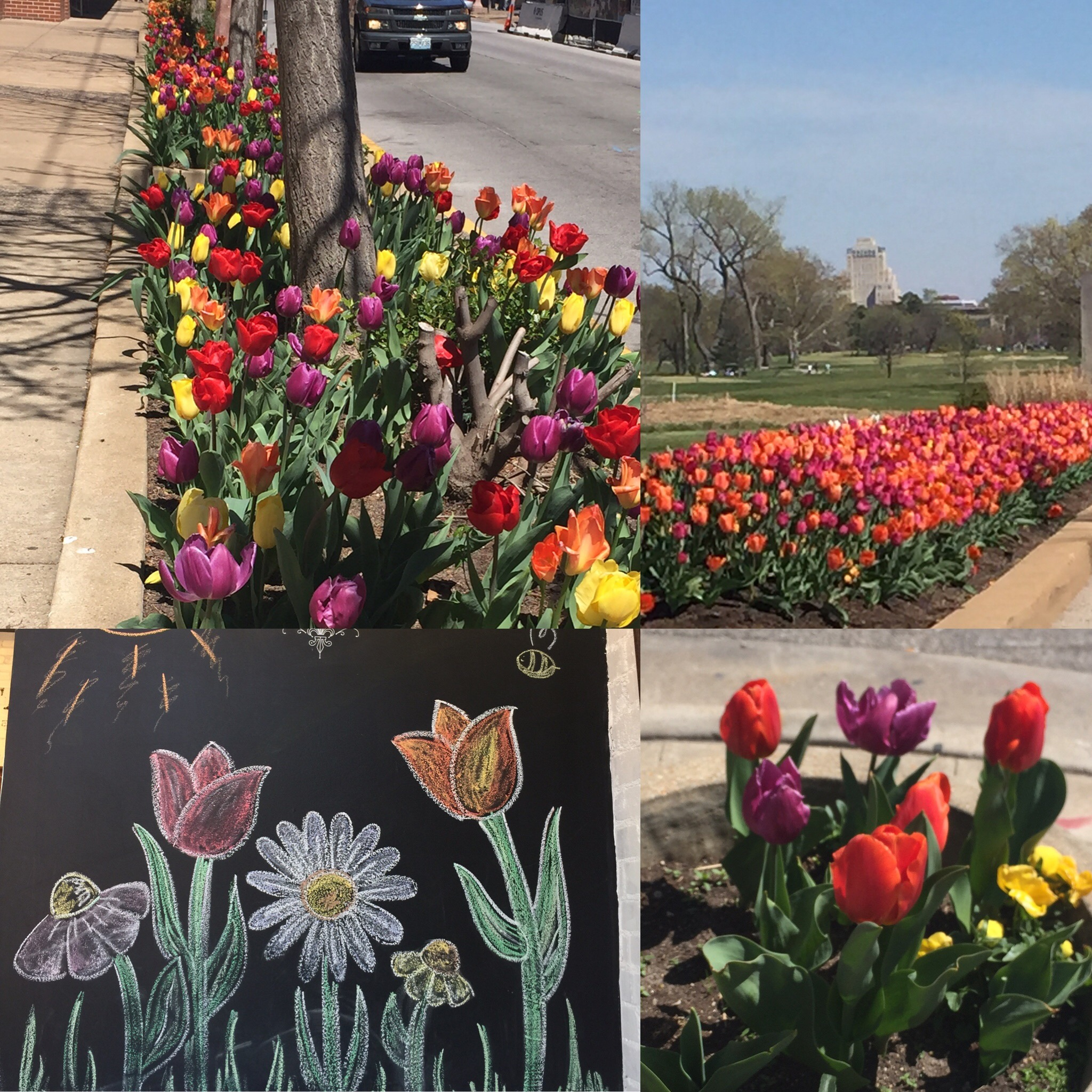 Tulips in St. Louis Weekend Foodie Getaway from Spinach Tiger
