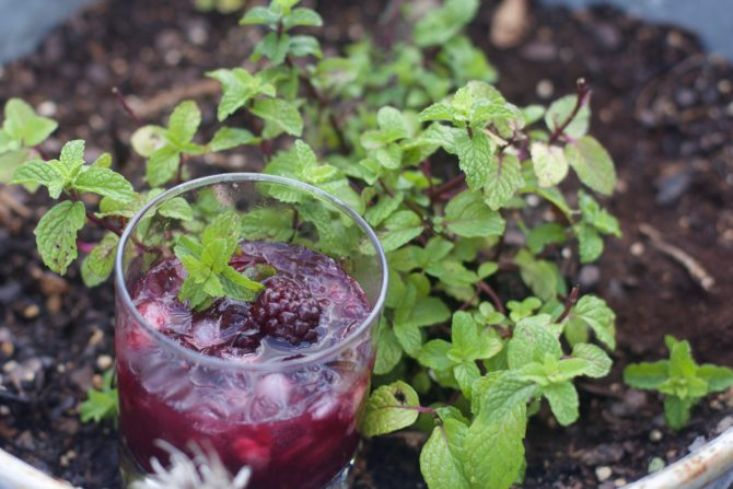 Use fresh mint in Blackberry mint julep