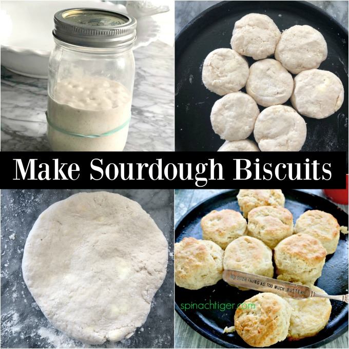 Make sourdough biscuits with leftover starter. It's so easy. This article explains how to make a sourdough starter and the best fluffy biscuits. #sourdoughstarter #sourdoughbiscuits #spinachtiger via @angelaroberts